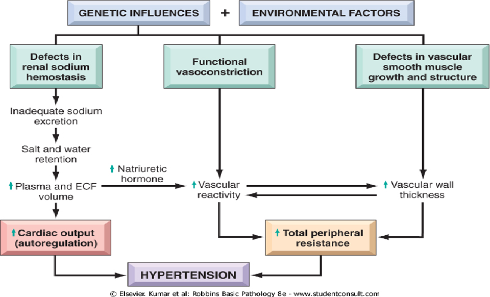 Pulmonary Hypertension Pathophysiology